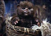 Ewok-Baby