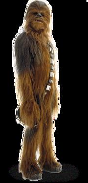 Chewbacca detail