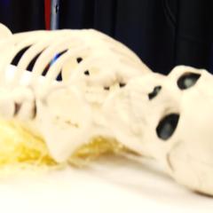 Jerma's skeleton is taken away on a stretcher