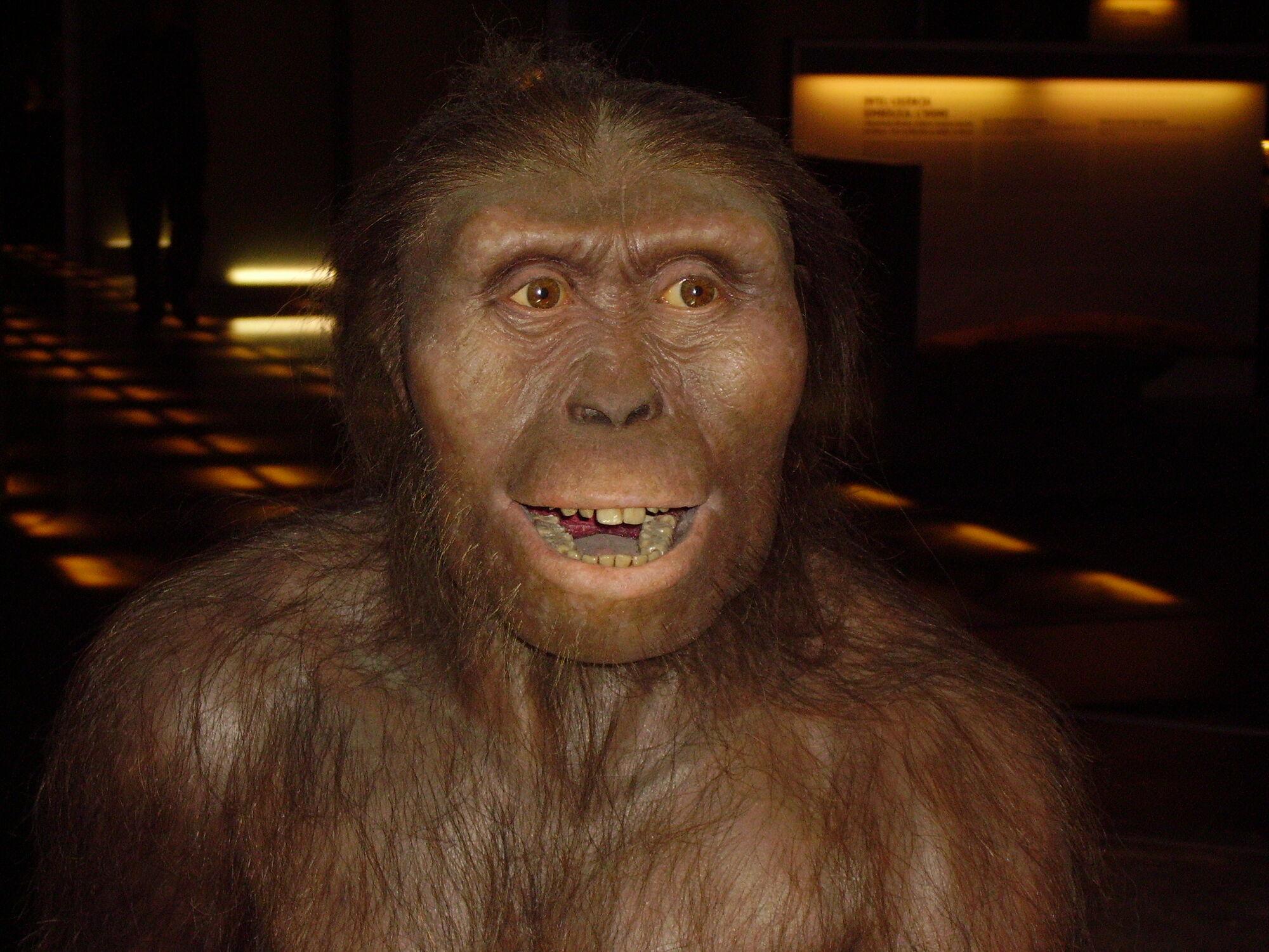 Potassium argon dating hominids lucy