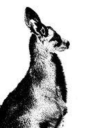 Kangaroo Silhouette