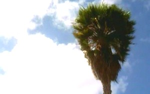 Cookoutpalmtree