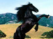 8764743-fotos-caballos-g