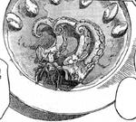 Octopus Tomato Sauce