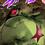 GreenBabyStar