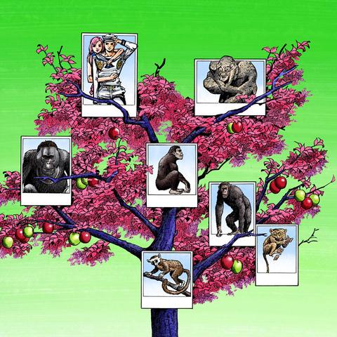 Эволюционное древо, изображающее людей, каменных людей и их общих предков