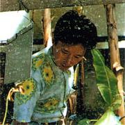 Araki66