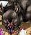 Unnamed Rat Manga