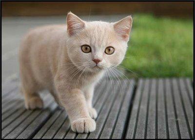 File:Cute-orange-cat-1-.jpg