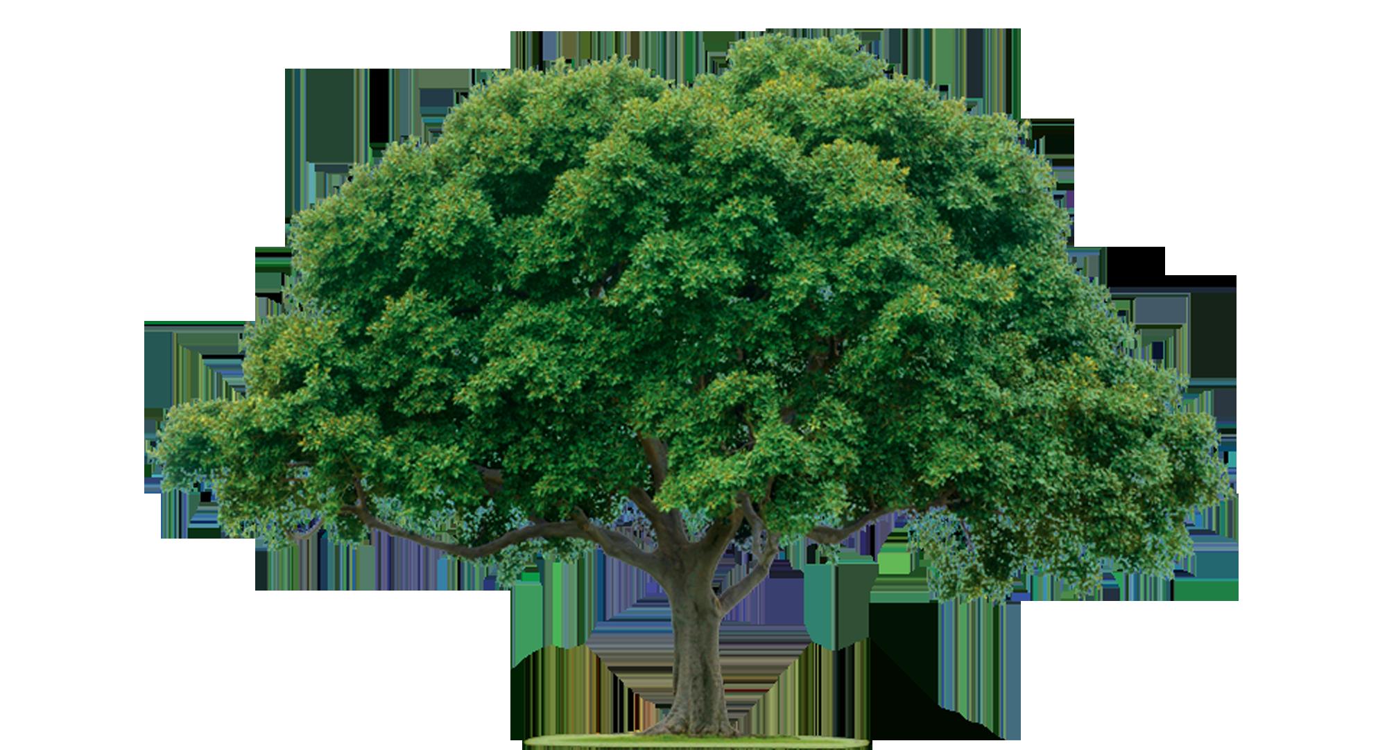 CompositeMildly Wanked Tree Joke Battles Wikia FANDOM powered