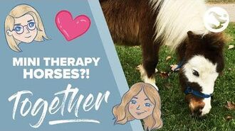 Mini Therapy Horses 💕🐴 TOGETHER by Star Stable Episode 1
