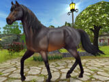 Jorvik Warmblood