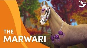 Meet The Marwari! 😍🐎
