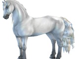 Sportowy koń fryzyjski