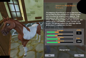 American Paint Horse -Tobiano