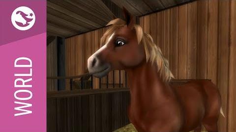 Star Stable World - Jorvik Pony
