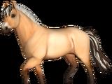 Koń fiordzki