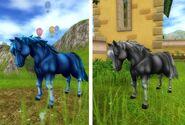 Jorveskie Dzikie konie 2