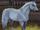 Starstablenews12/New Years horses!