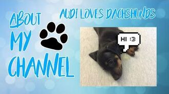 About My Channel - Audi Loves Dachshunds