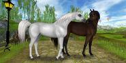 Arabians296
