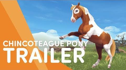 Chincoteague Pony | Jorvikipedia | FANDOM powered by Wikia