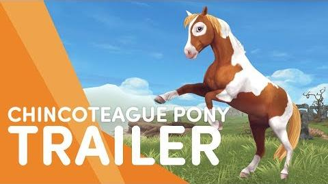 The Chincoteague Pony - Star Stable Trailers