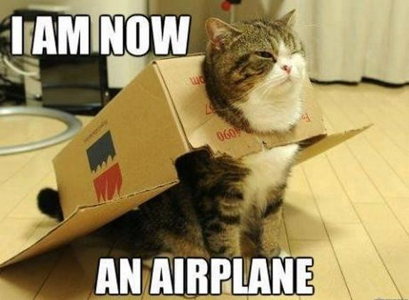 Image top 30 funny cat memes hilariousg jorvikipedia fandom top 30 funny cat memes hilariousg voltagebd Gallery