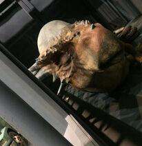 JW-FK Behind The Scenes Stygimoloch Photo Up Close