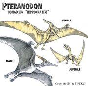 HippocratesiPteranodon