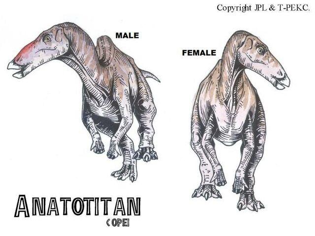 File:Anatotitan.jpg