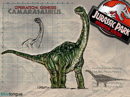 Camarasaurus W