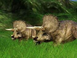 JPOG triceratops