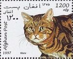 Afghanistan 1997 Cats g