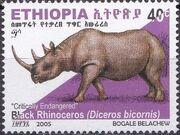 Ethiopia 2005 Black Rhinoceros h