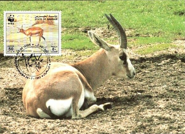 Bahrain 1993 WWF - Sand Gazelle MCd