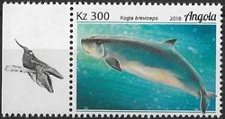 Angola 2018 Wildlife of Angola - Whales d