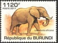 Burundi 2011 Elephants of the African Savanna j