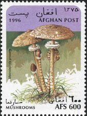 Afghanistan 1996 Mushrooms f