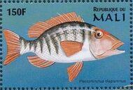 Mali 1997 Marine Life e