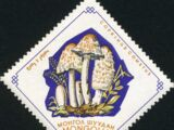 Mongolia 1964 Mushrooms