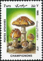 Afghanistan 1985 Mushrooms c