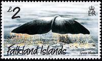 Falkland Islands 2012 Whales & Dolphins j