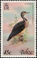 Belize 1978 Birds of Belize (2nd Issue) c