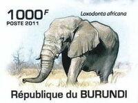 Burundi 2011 Elephants of the African Savanna f