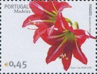 Madeira 2006 Madeira Flowers j