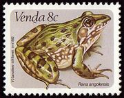 Venda 1982 Frogs a