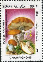 Afghanistan 1985 Mushrooms g