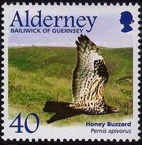 Alderney 2002 Migrating Birds Part 1 Raptors d