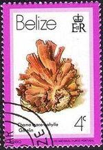 Belize 1980 Shells and Sea Snails d